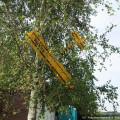 Taxi 2 im Baum